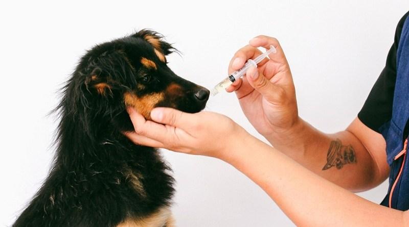 Medicina preventiva para animales de compañía