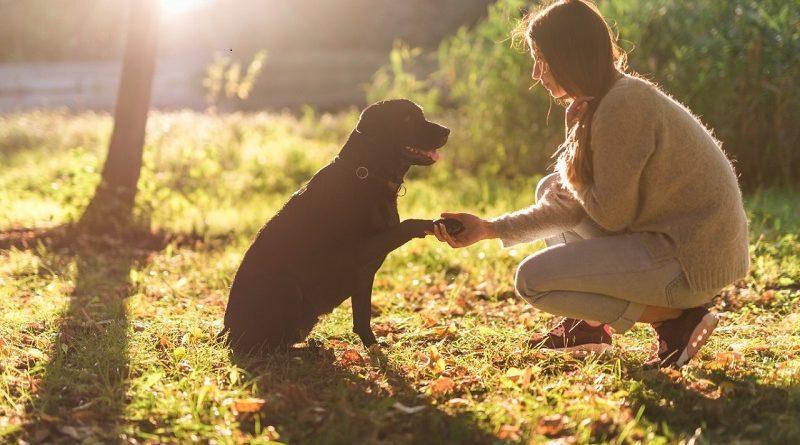 Cómo cuidar a tu animal de compañía en días de calor