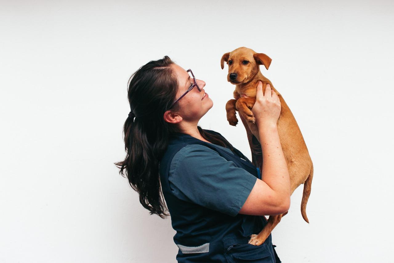Conozca qué tomar en cuenta antes de adoptar un animal de compañía