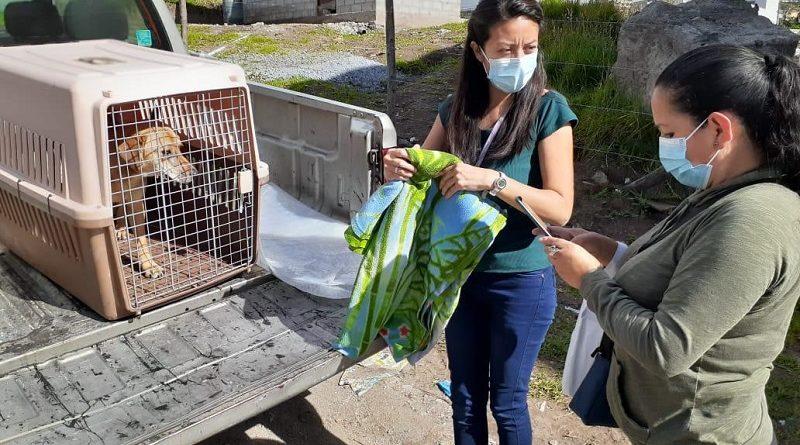 Convivencia y tenencia responsable de animales de compañía en Zonal Los Chillos