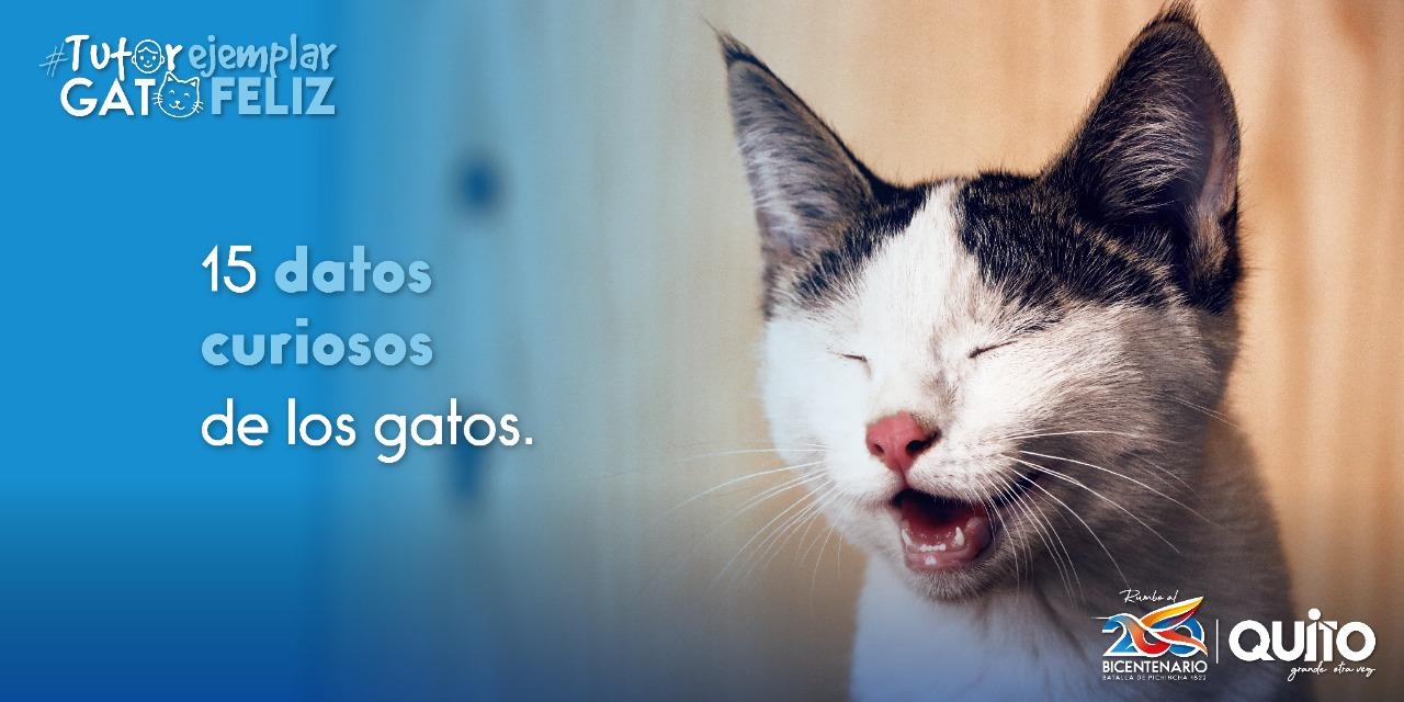 15 curiosidades sobre los gatos