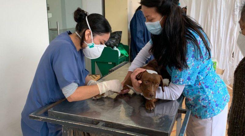 800 animales de compañía esterilizados en Los Chillos