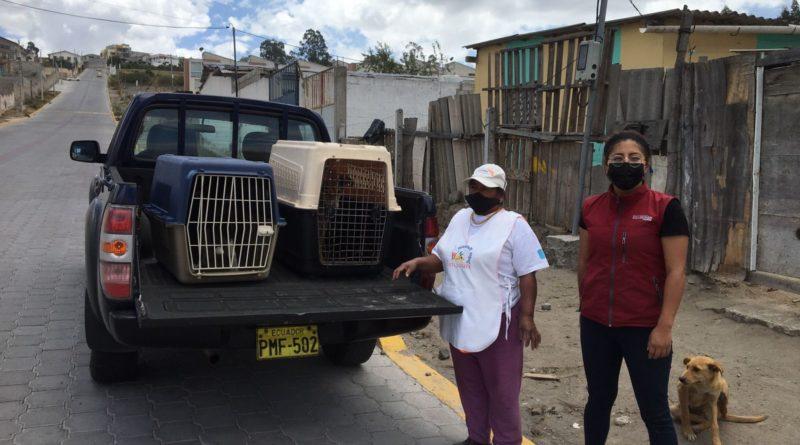 Animales de compañía regresarán a casa esterilizadas
